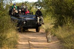 med-safari-051117a
