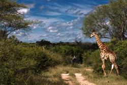 med-safari-051119a
