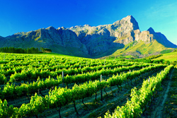 one-and-only-cape-town-cape-winelandsa